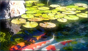 Koi ponds waterfalls pondless systems in orange county ca for Koi pond builders orange county